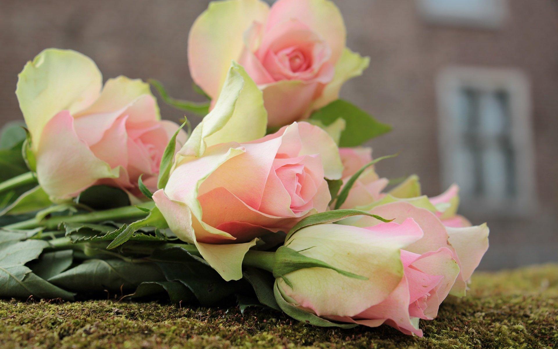 старых домов букет цветов в картинках роз на рабочем столе курицей