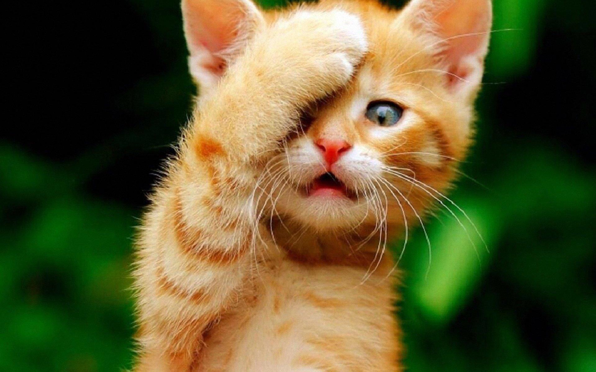 Картинки смешные рыжие коты, тебя обожаю