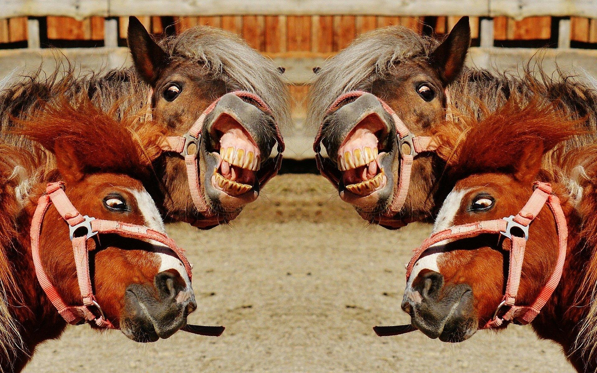 Прикольные картинки на аву с лошадью