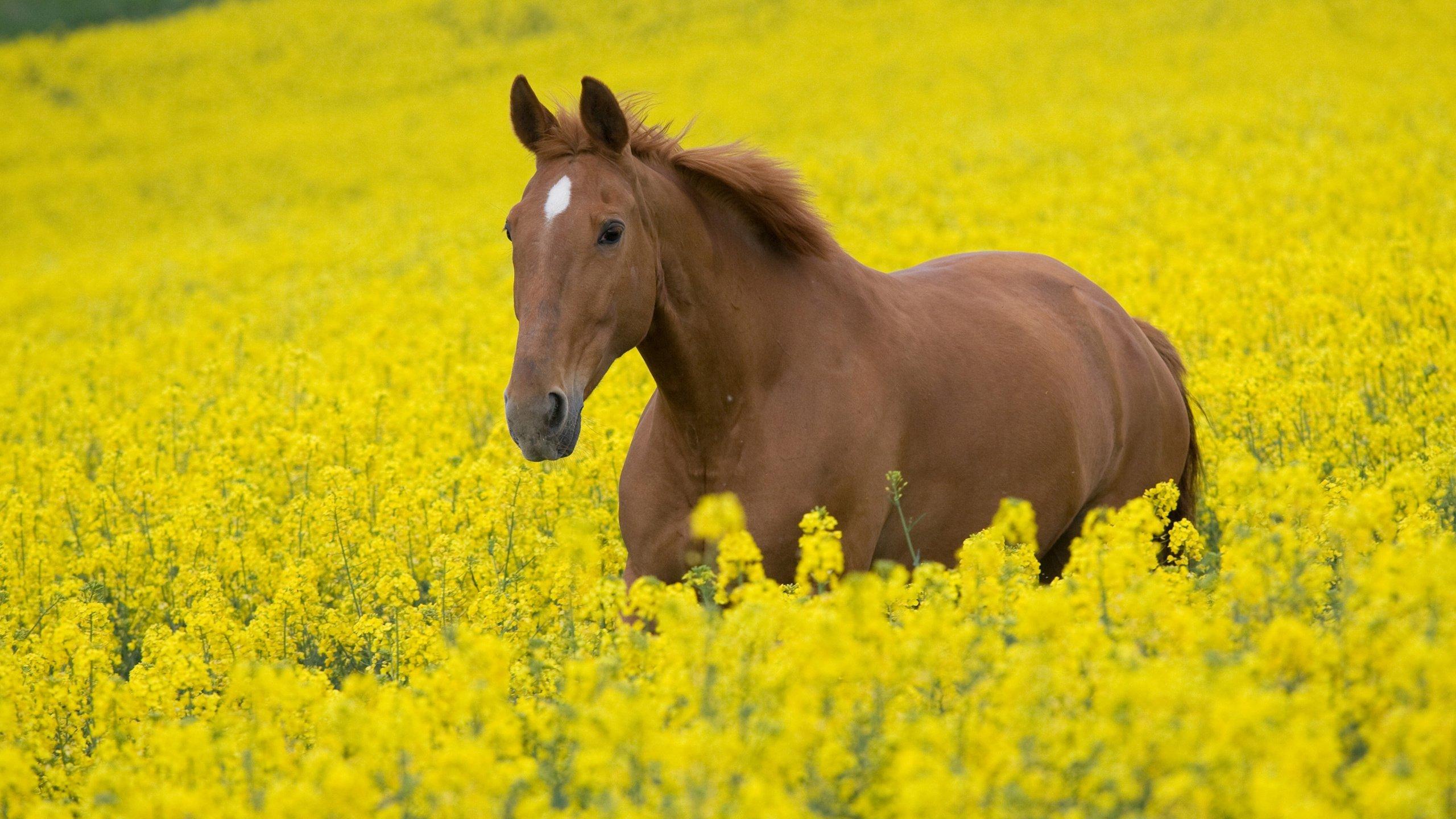 Лошадка Для Детей картинки, бесплатные обои и фото 54