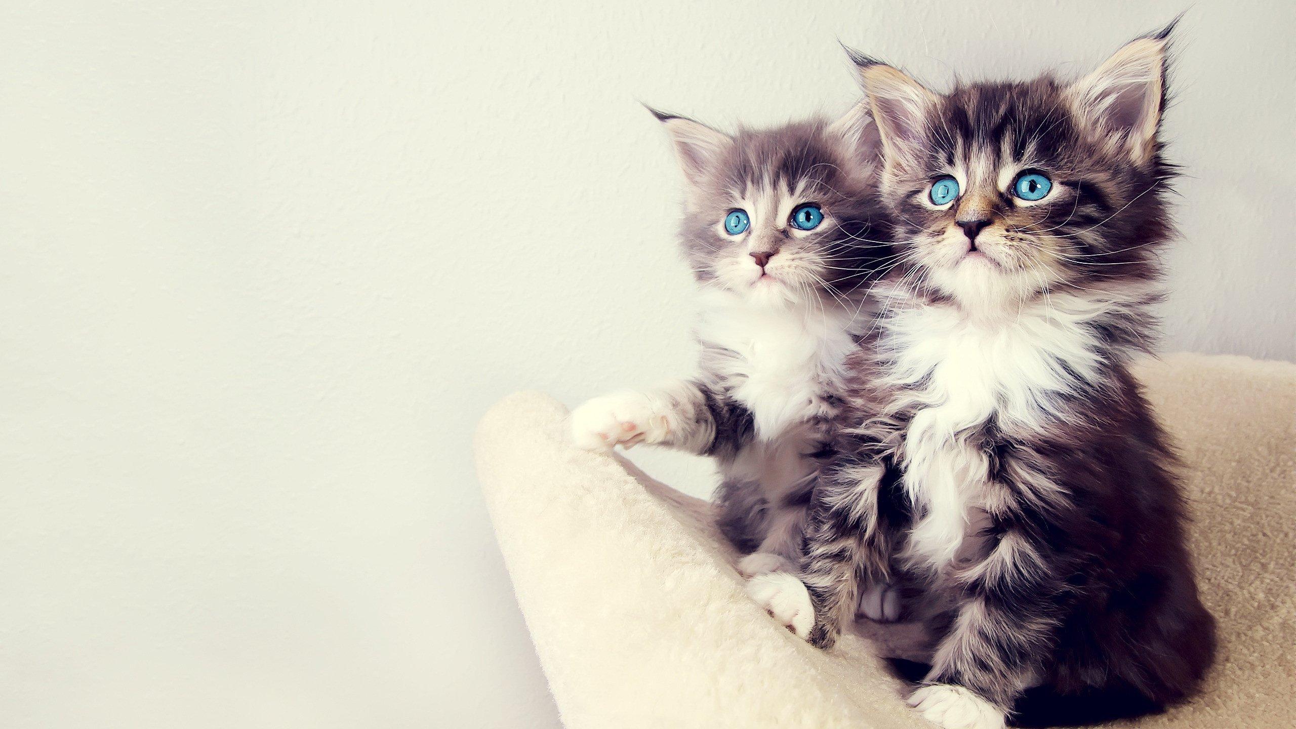 котенок взгляд милый kitten view cute бесплатно