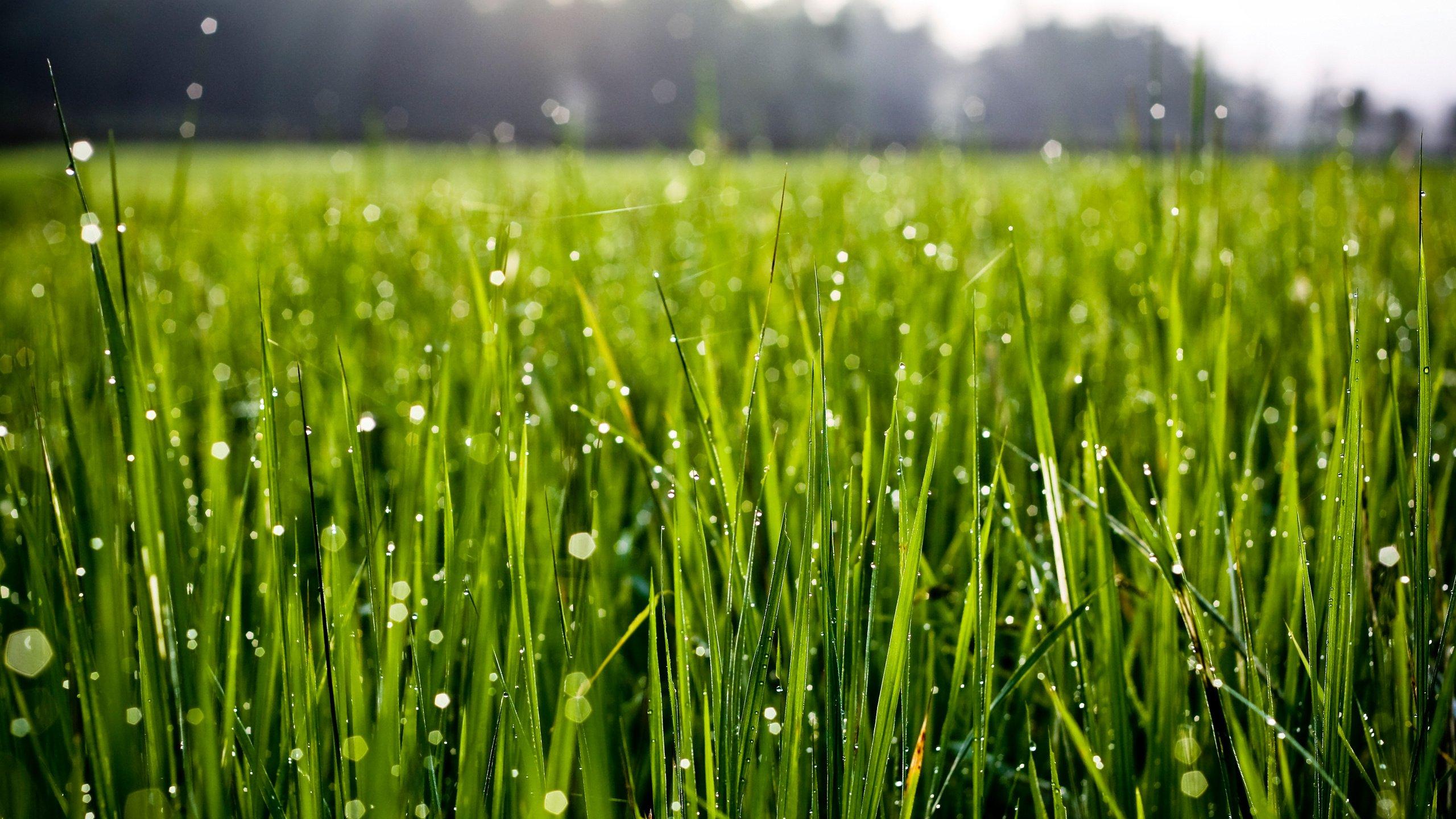 Зеленая, летняя трава  № 1074236 без смс