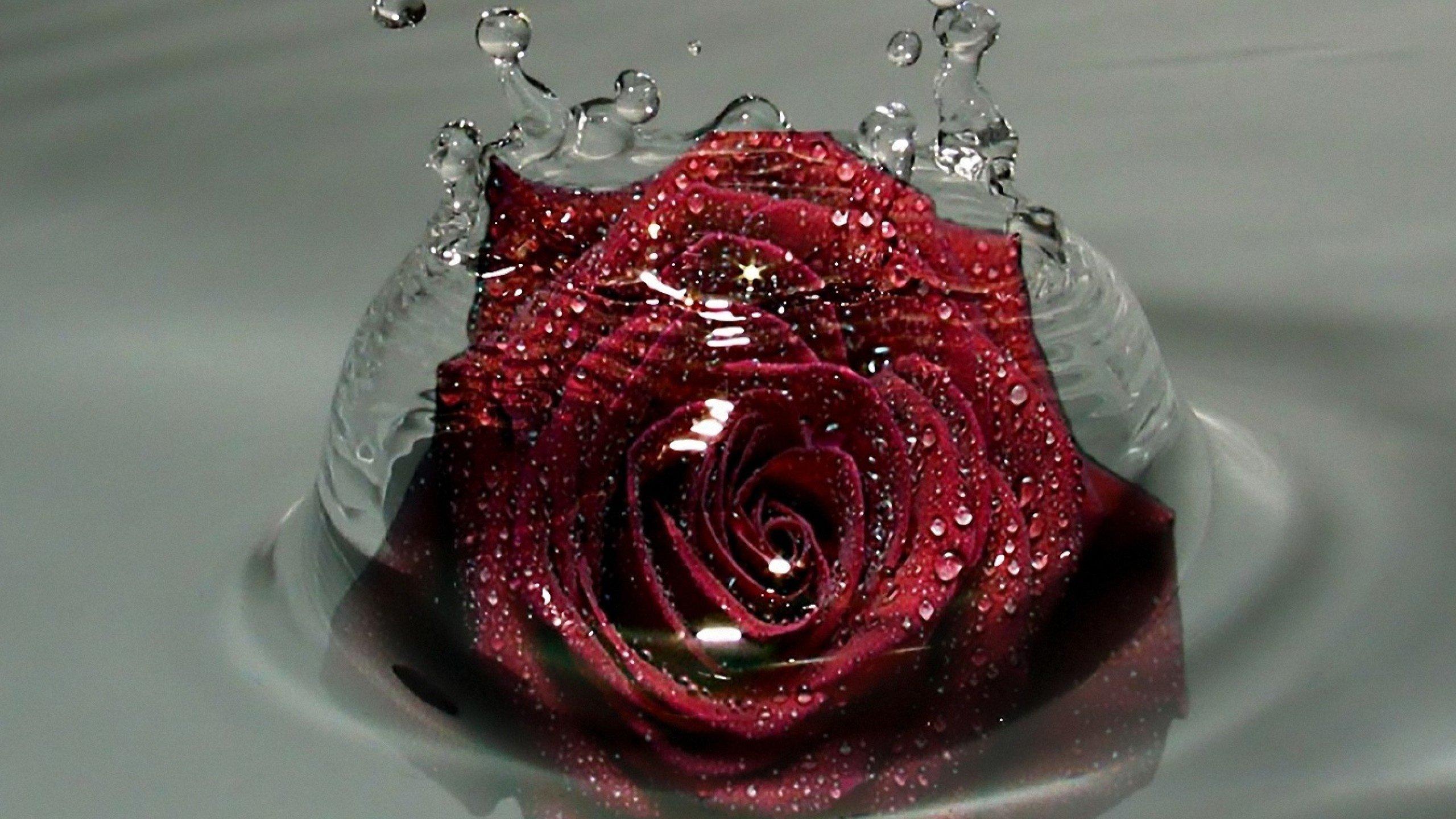Самые красивые картинки роза бойлер менее