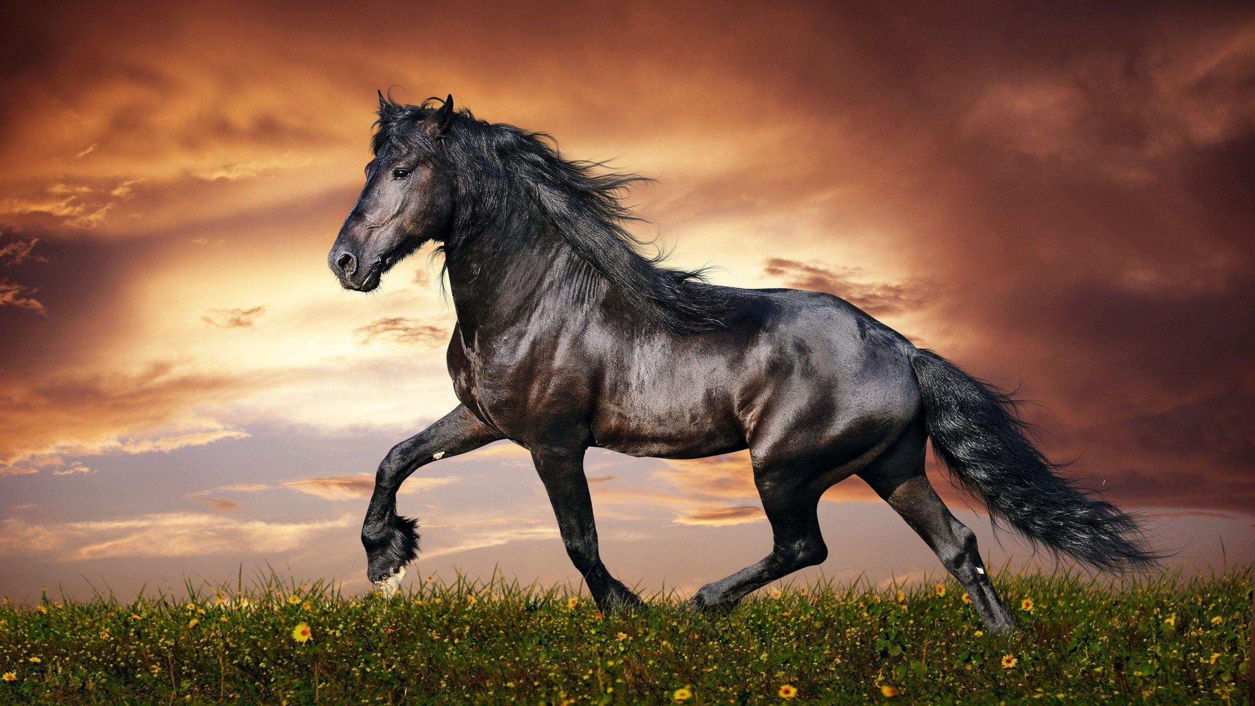 лошадь картинки большого разрешения могут заезжать