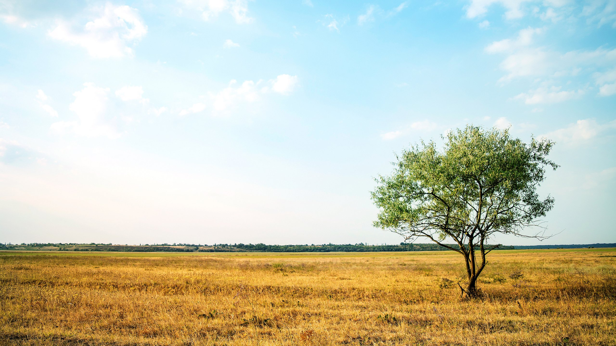 блондинка дерево поле blonde tree field  № 1377145 загрузить