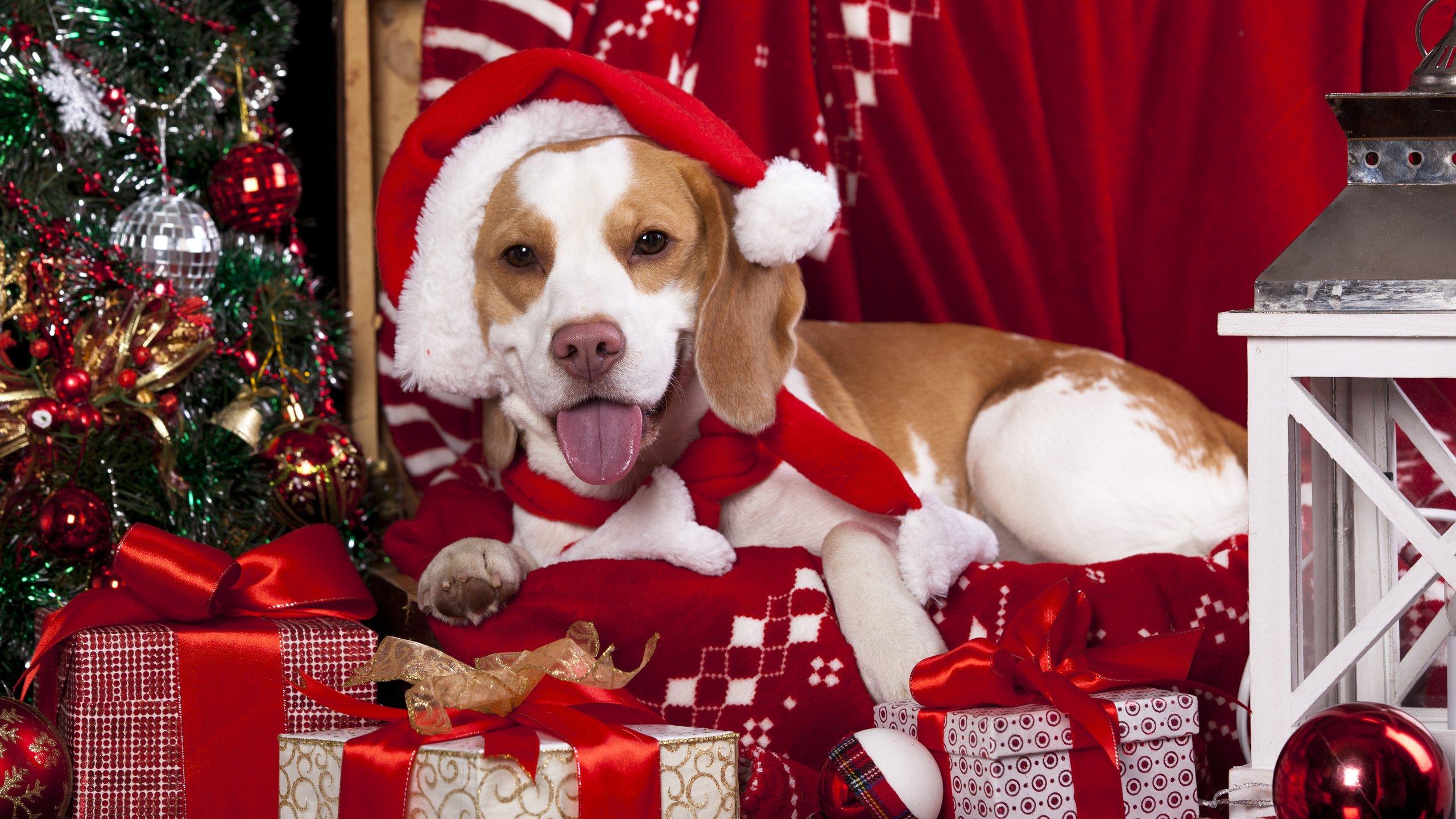 щенок с новогодним колпаком бесплатно