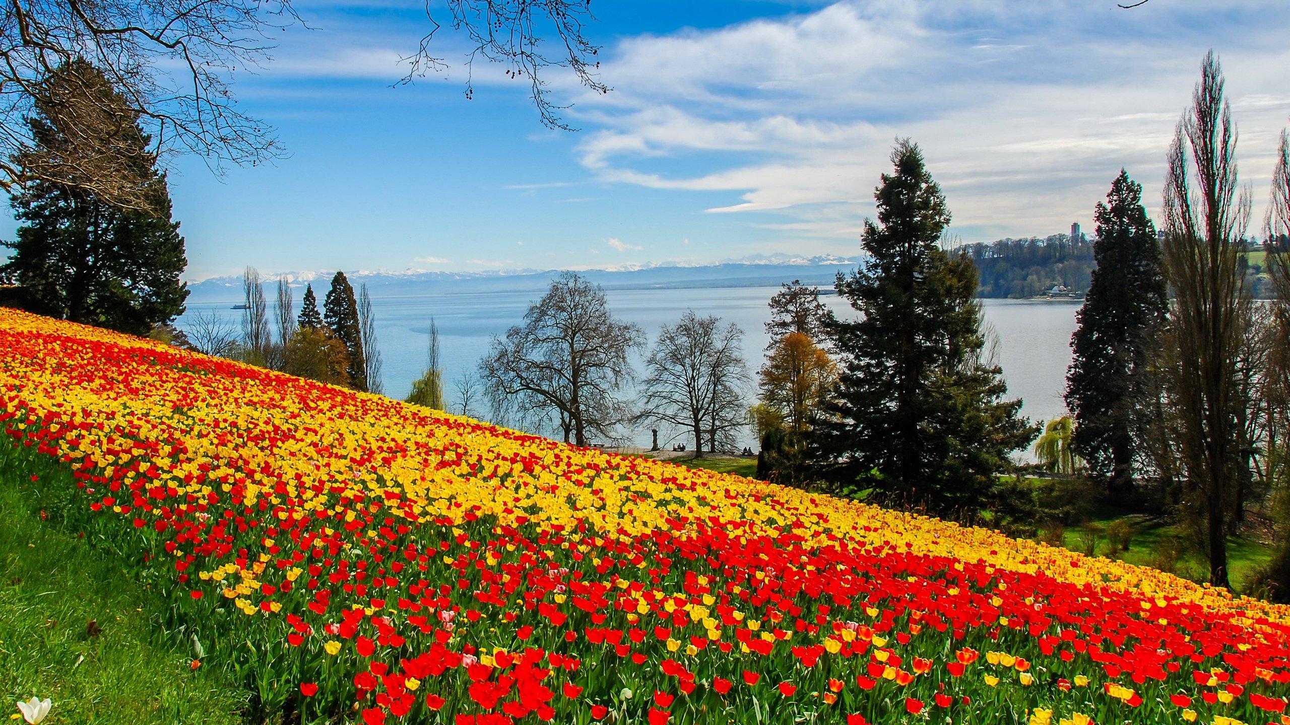 деревья природа цветы река без смс