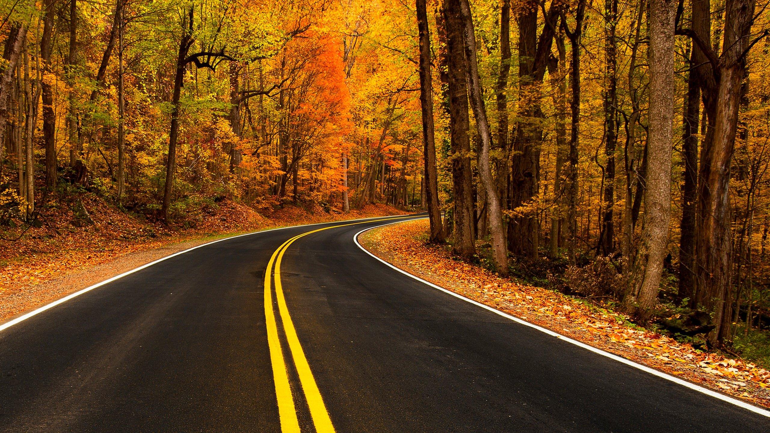 автомобиль осень лес дорога  № 3771384 загрузить