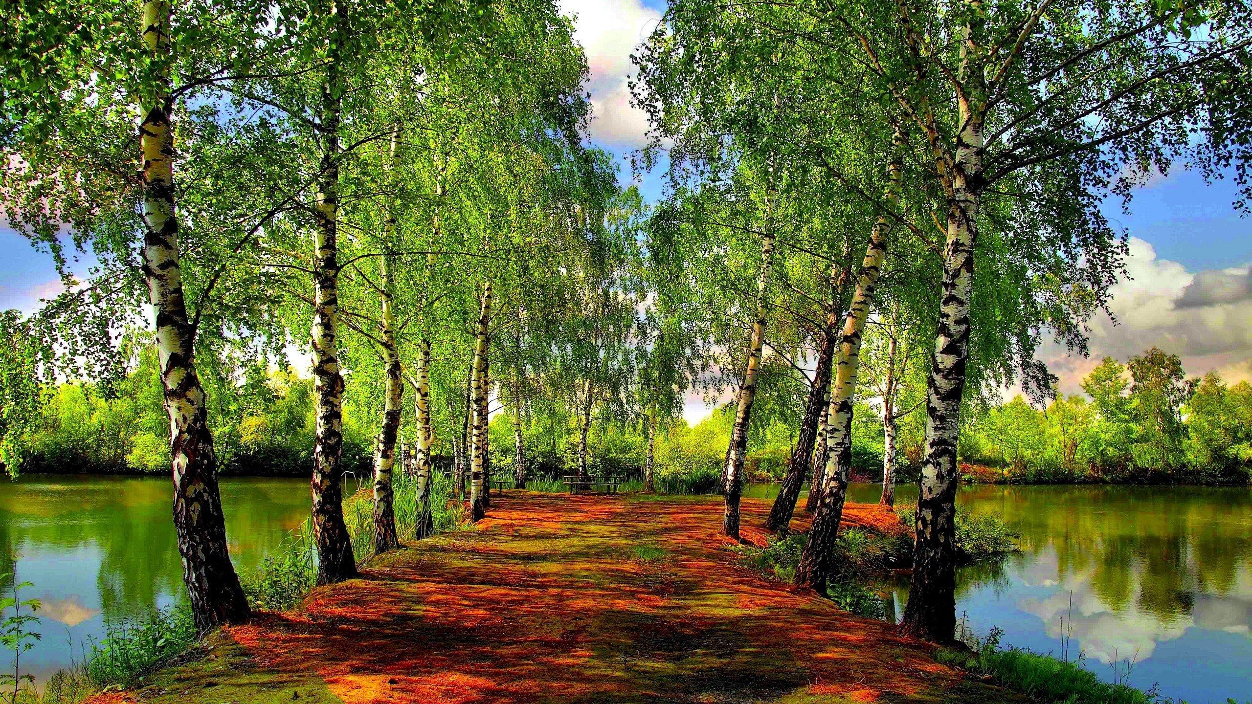 природа береза деревья вода озеро лес  № 2791963 без смс
