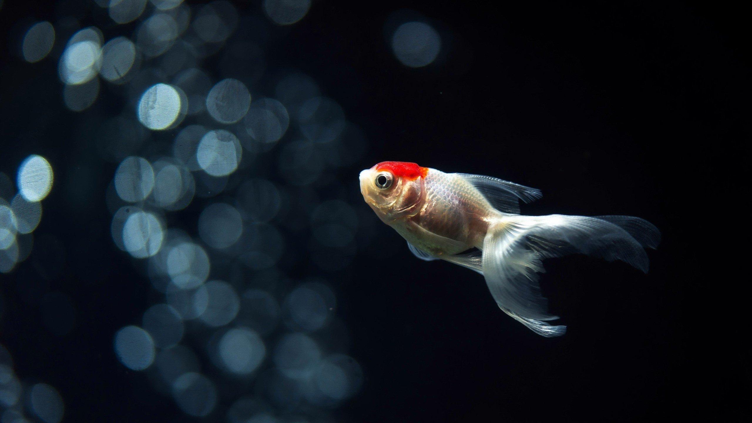 Обои Аквариум, рыбка. Животные foto 19