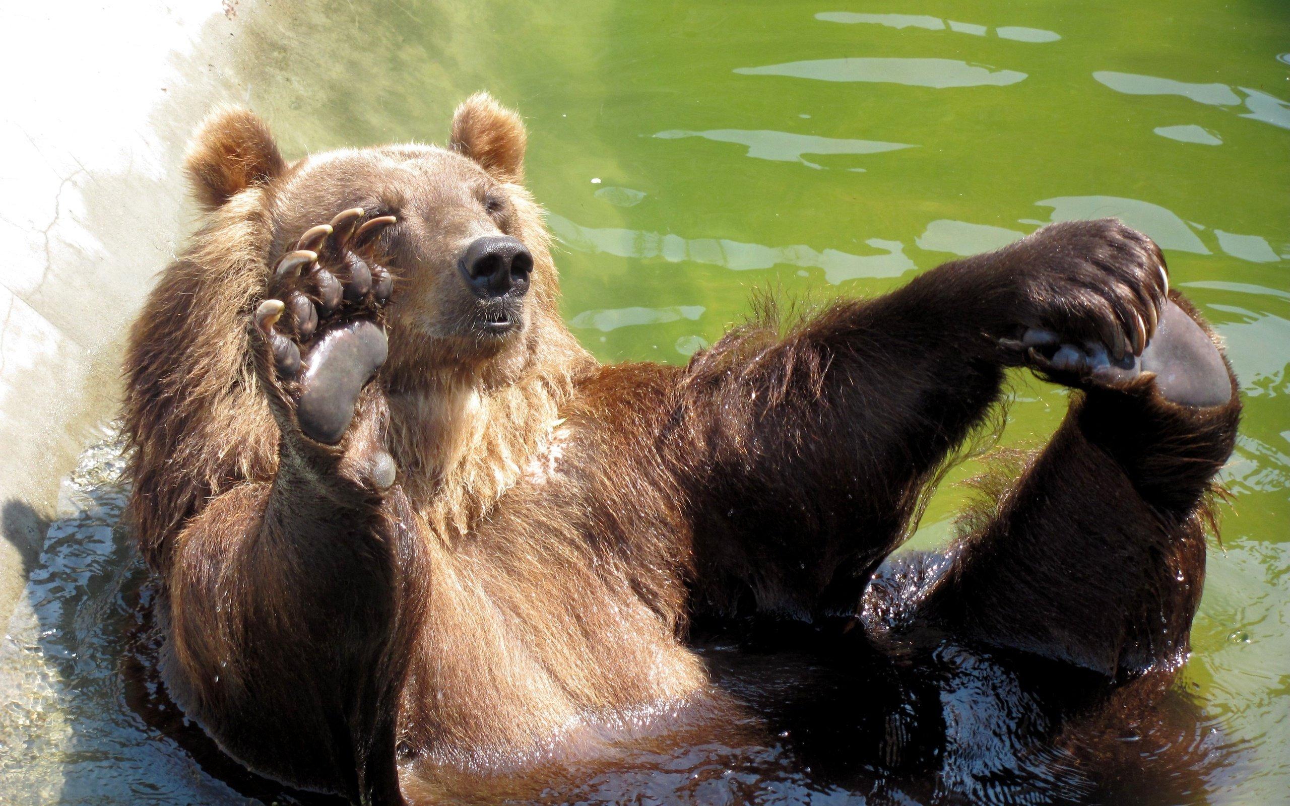 Поздравления, картинка смешные медведи