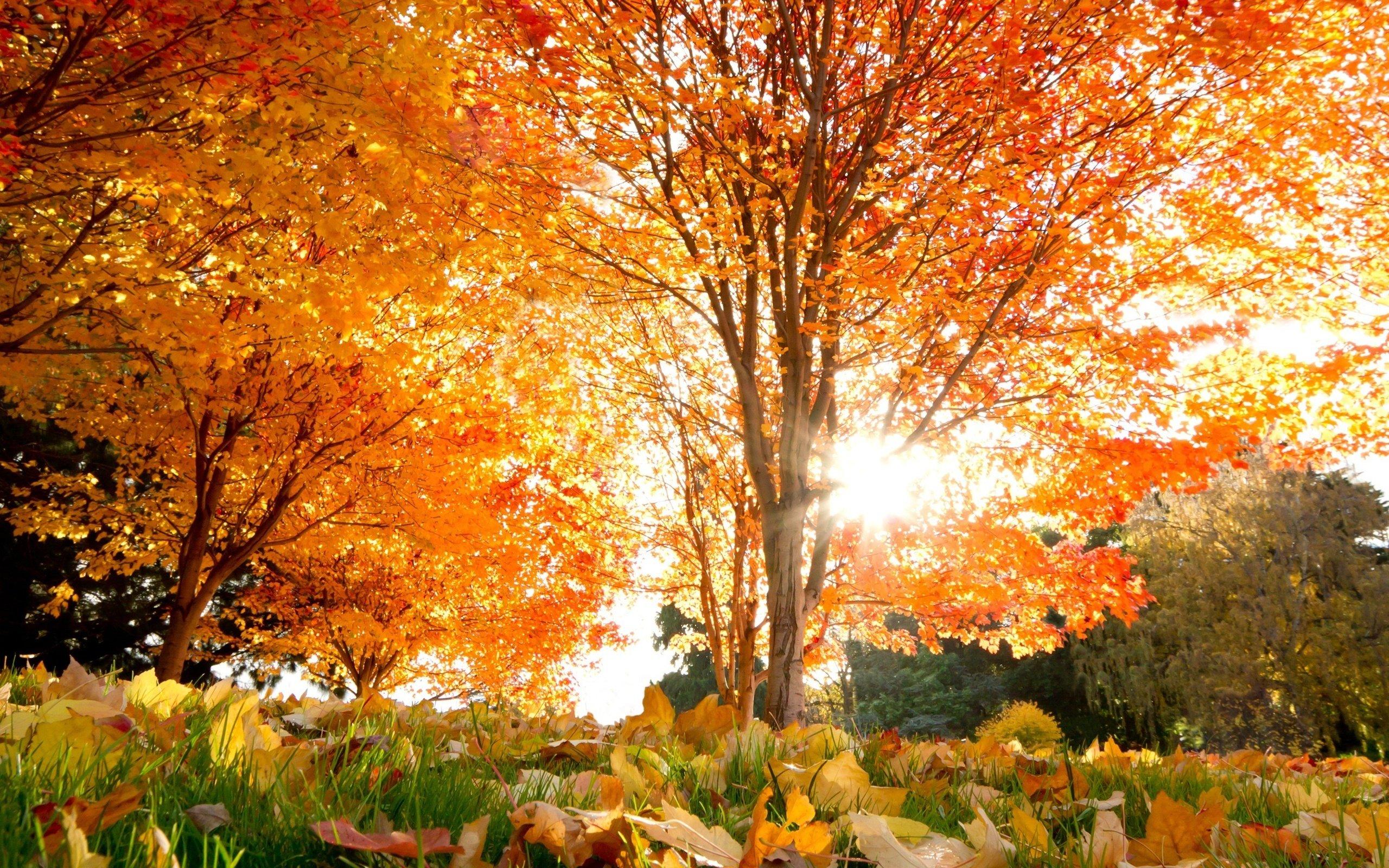 очень красивые картинки про осень последнем фото