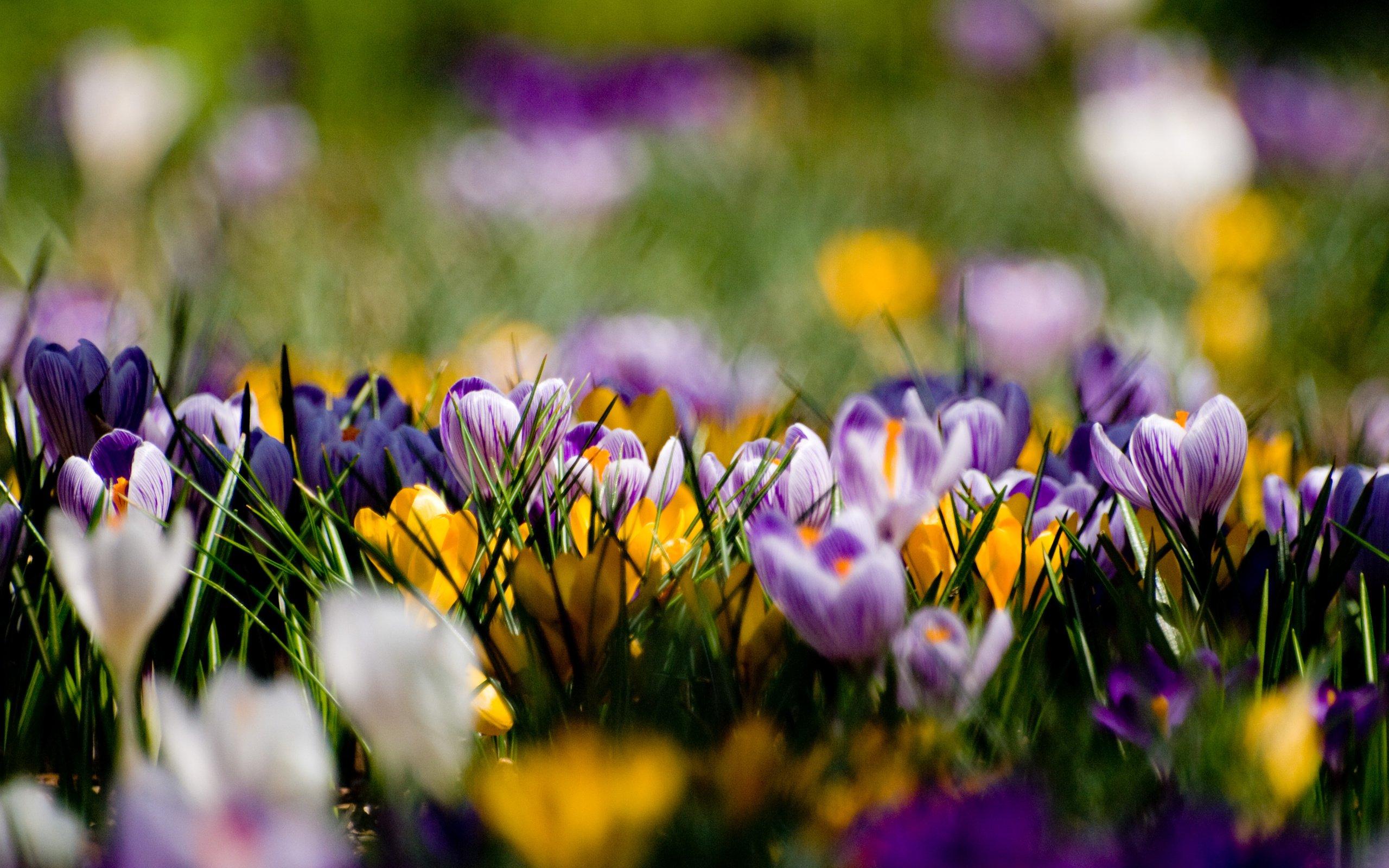 обои во весь экран весна тот цвет, который