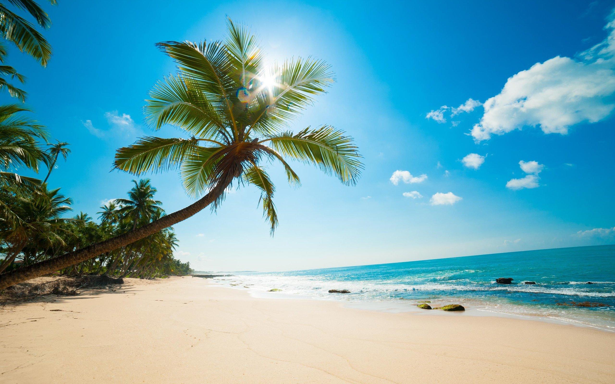 Солнце пальмы картинки