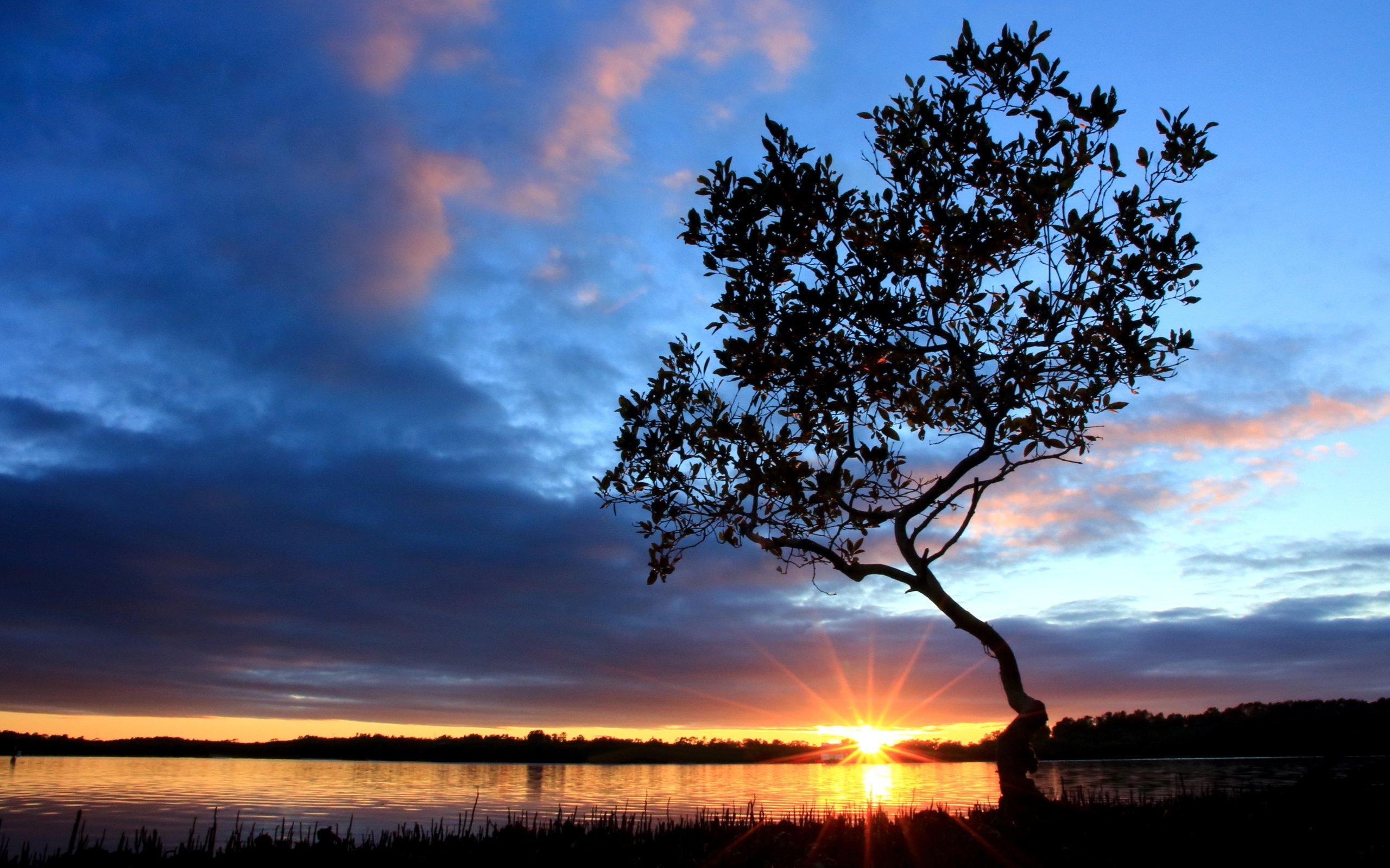 Закат озеро деревья бесплатно