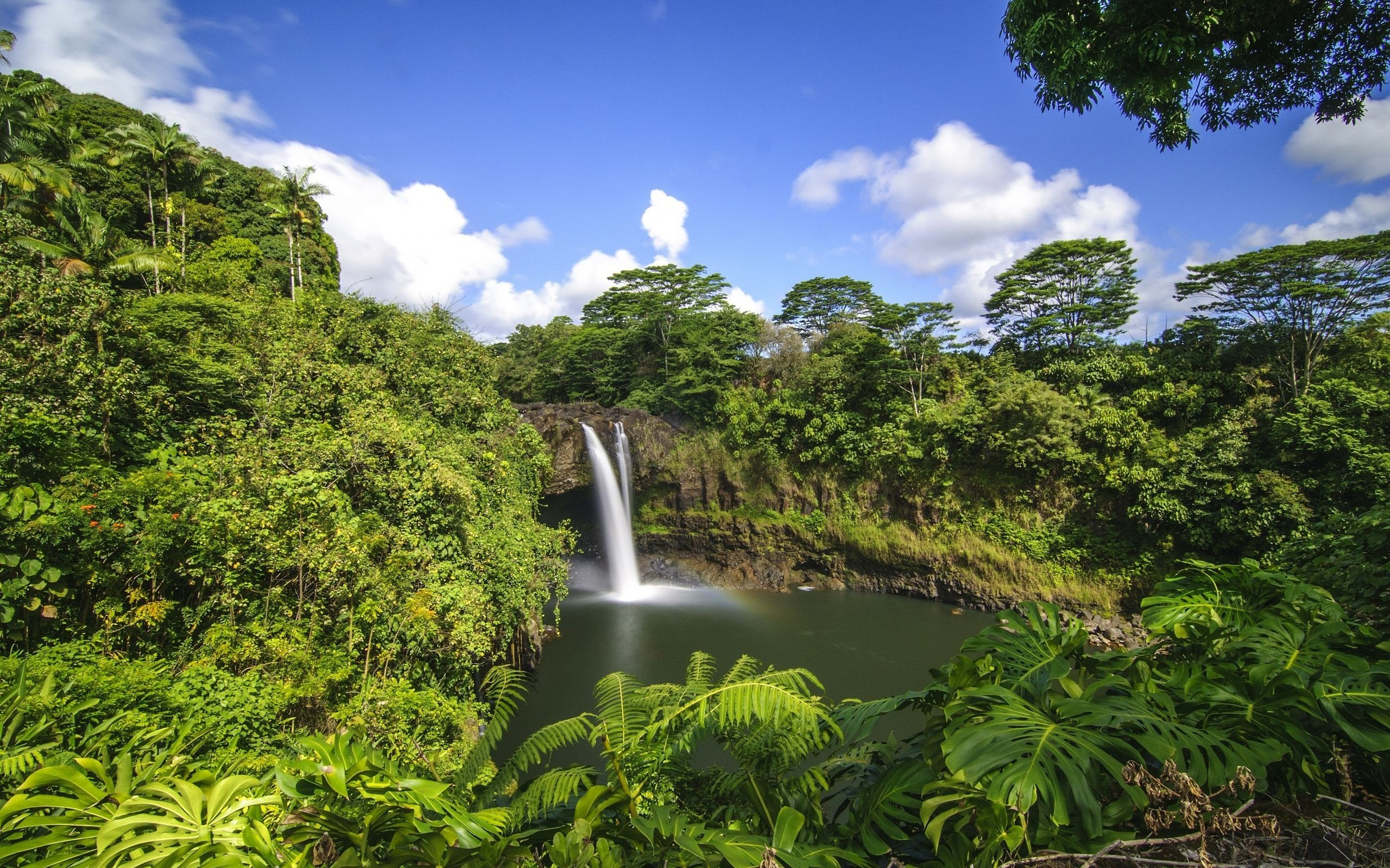 tropical rain forest and tropical grassland