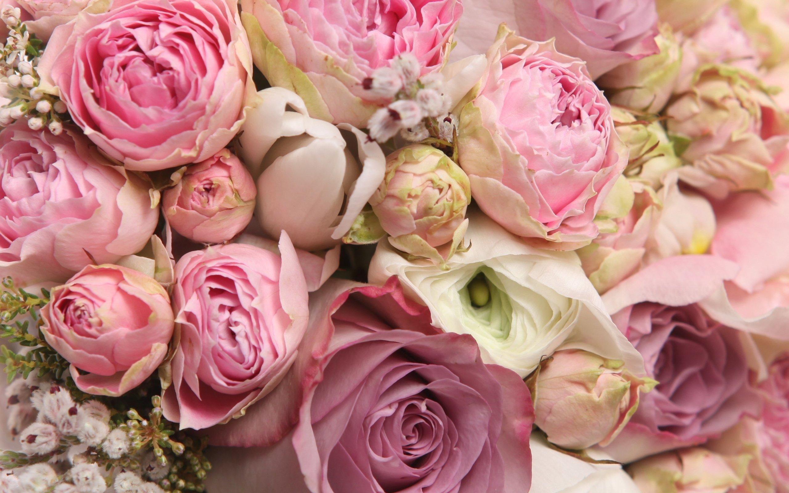 сексуальная барышня нежные цветы фото большие лучше