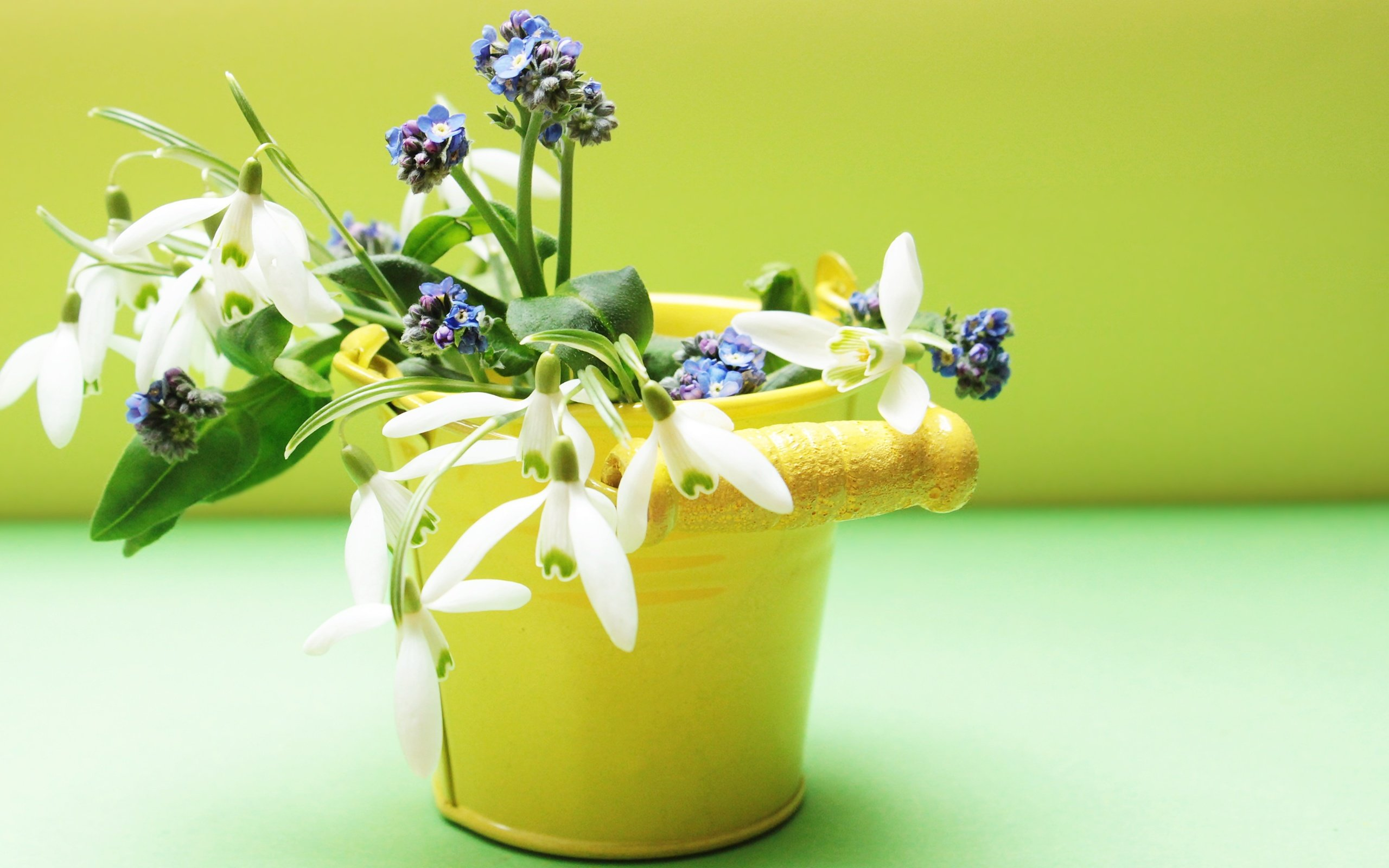 природа цветы ведро  № 464575 загрузить