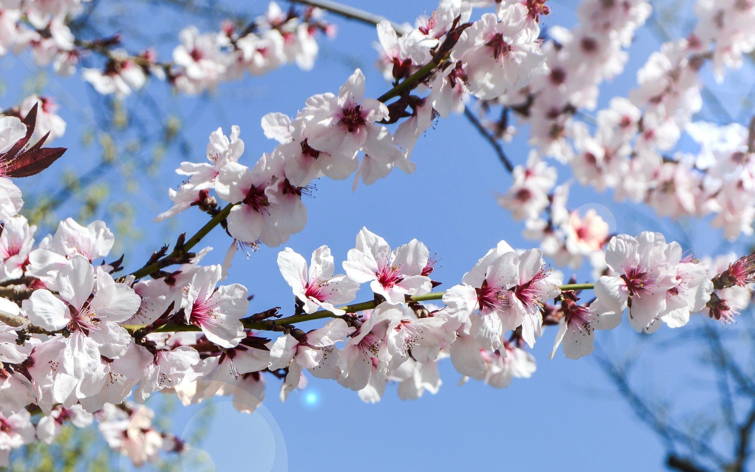 Первому июня, картинка цветут сады весной