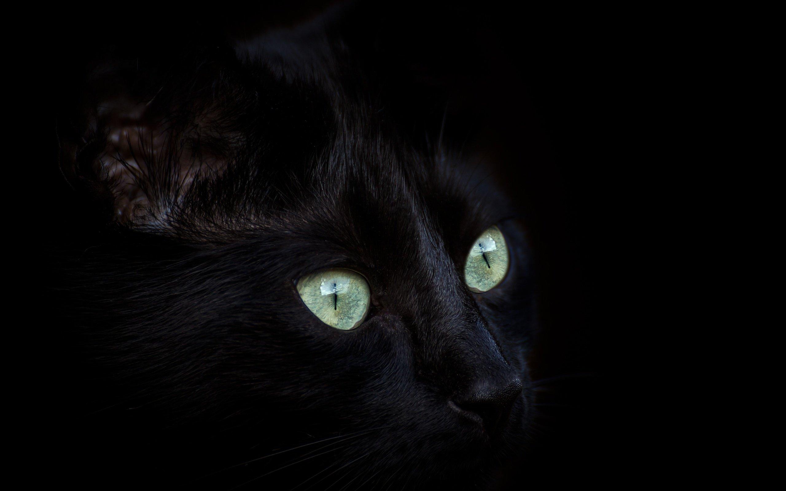 населенный картинки глаз черной кошки давно известны