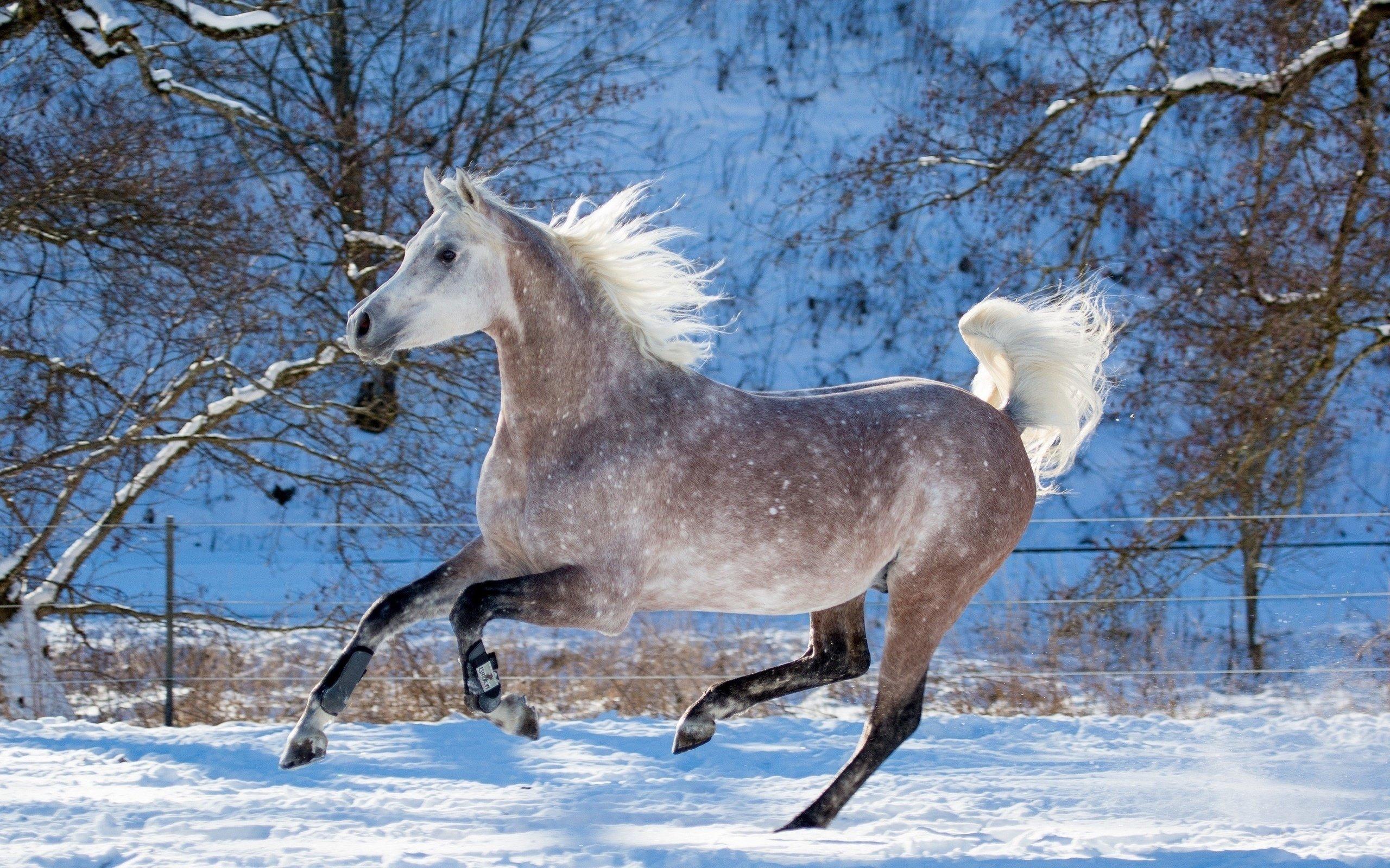 Картинки про лошадей зимой максимального