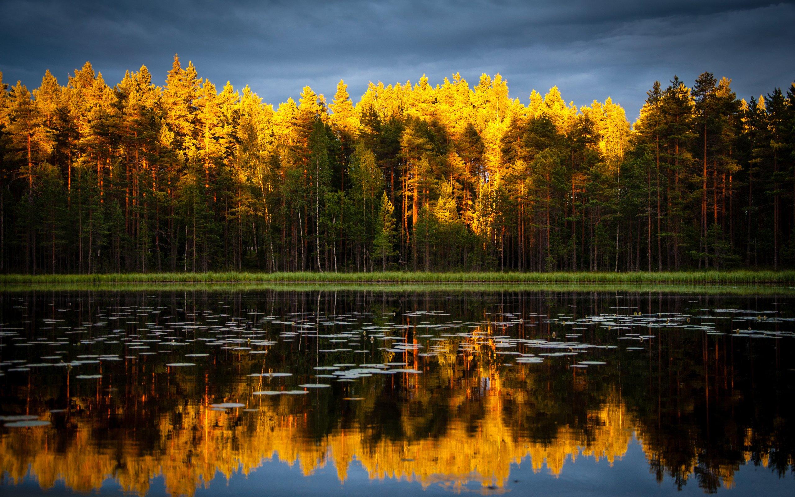 деревья осень небо озеро скачать
