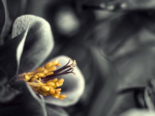 цветы тычинки лепестки загрузить