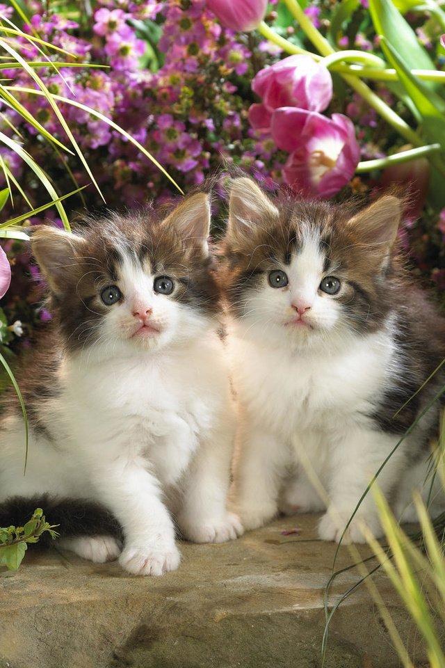 Живые картинки кошки и котята, днем рождения сына