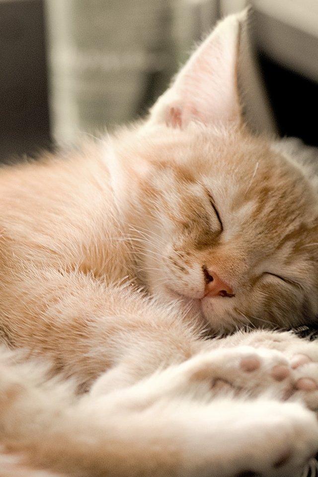 картинки про спящих котиков будем