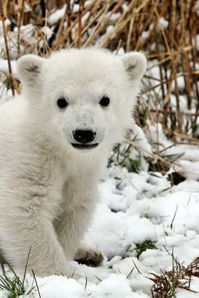 лично фото белого медвежонка дорожки это своего