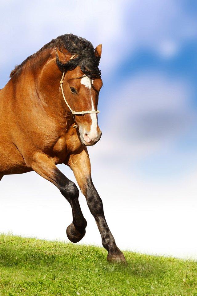 Картинки лошадей живых