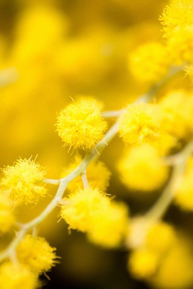 Картинка для айфона желтого цвета рацион