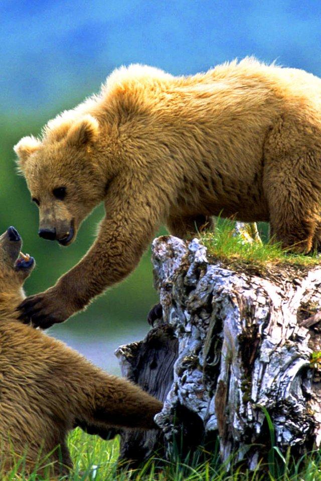 Сестре, медведь фото и открытки