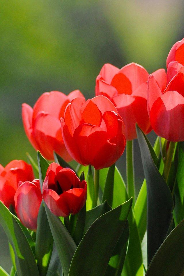 здесь картинки доброе утро с тюльпанами отец