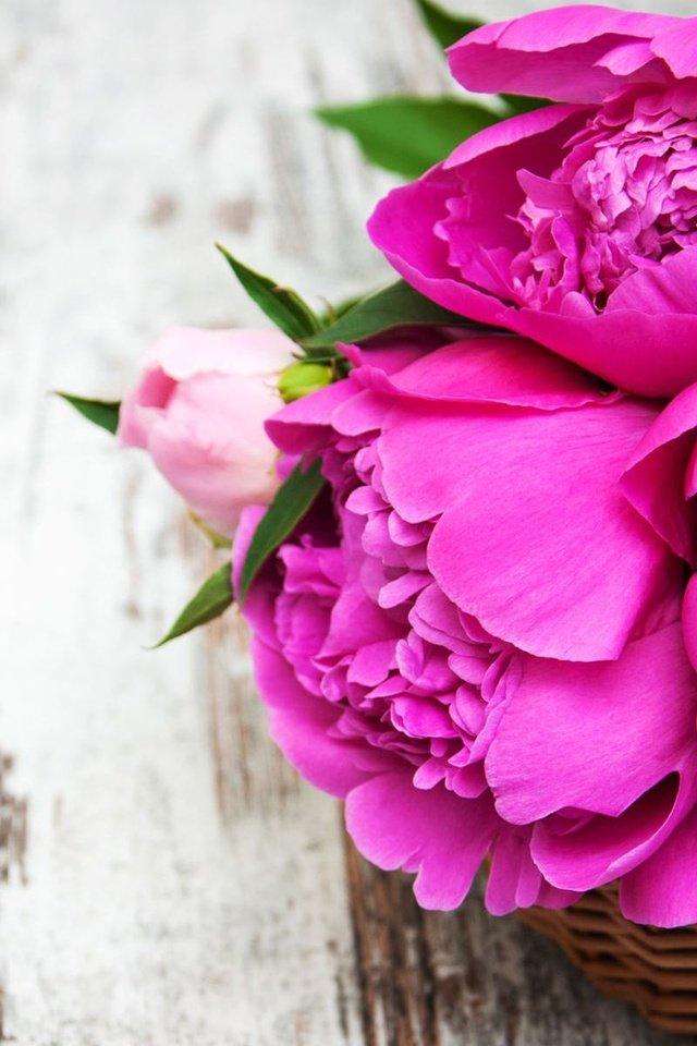 Картинки на заставку телефона для девушек цветы пионы
