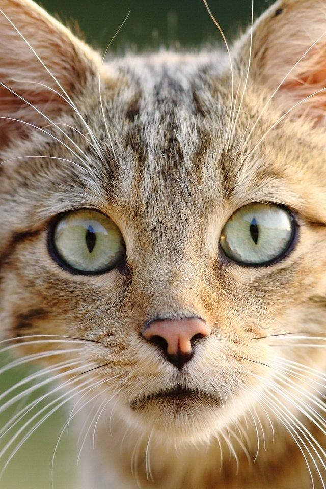 картинки кошачьи мордочки выполняет важнейшие