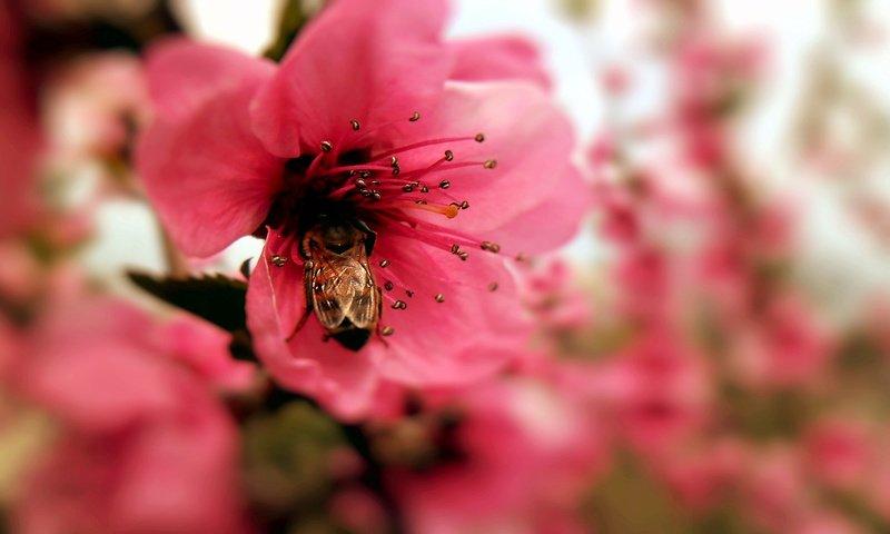 макро цветок пестик  № 3231582 без смс