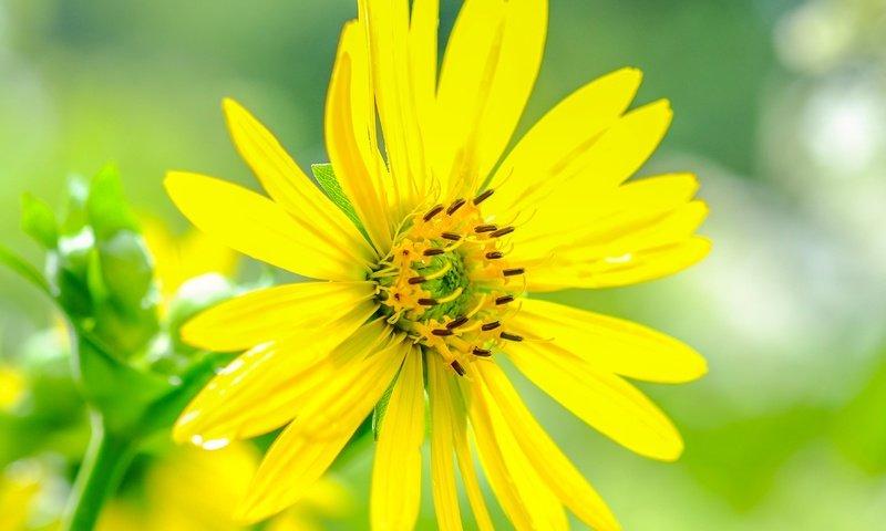 Желтый цветок  № 671015 загрузить