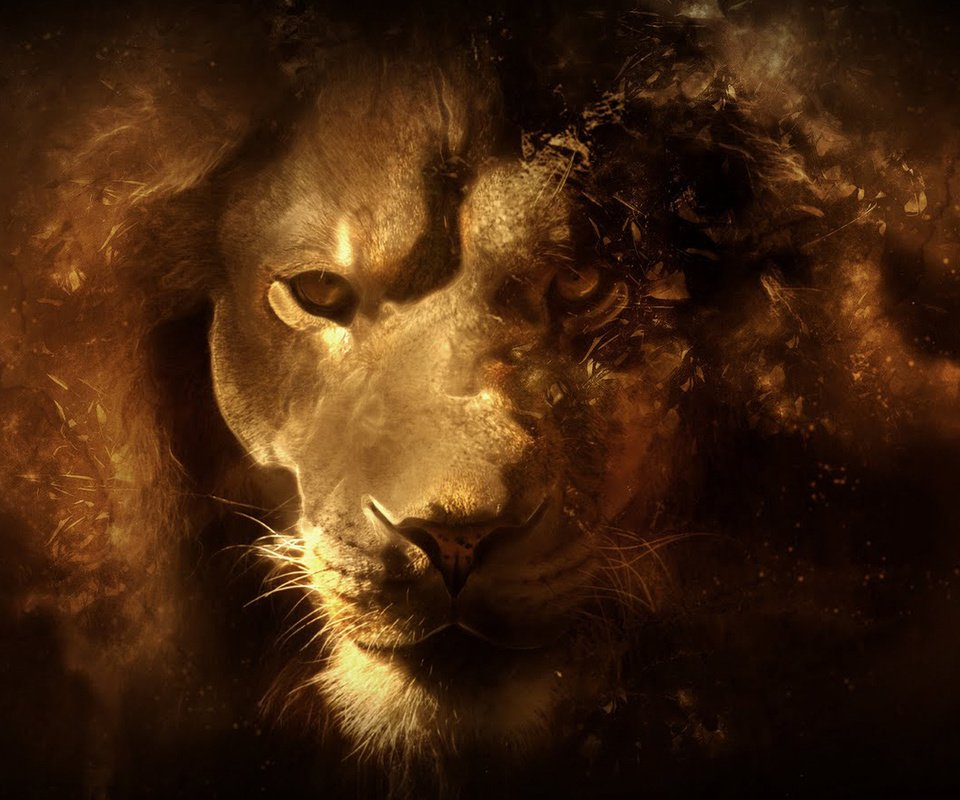 Lioness face hd