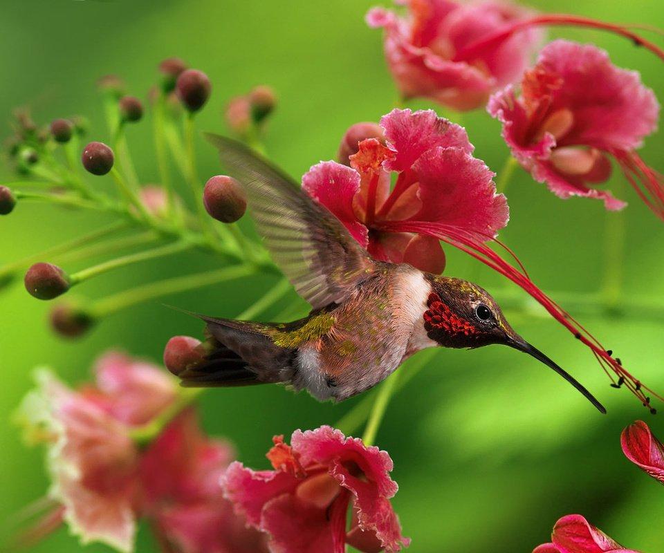 птица природа ветка колибри  № 1994291 бесплатно