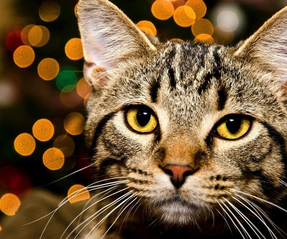 Милые кошки с бантиками картинки поиск организаций