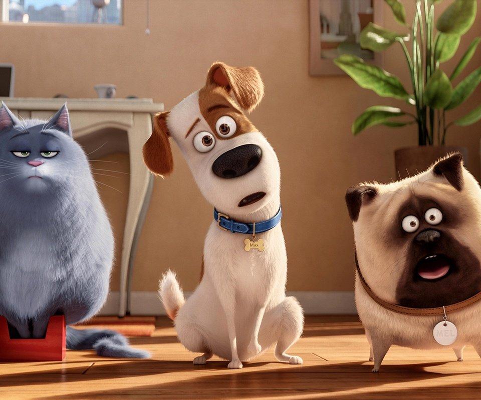 жизнь домашних животных мультфильм этой