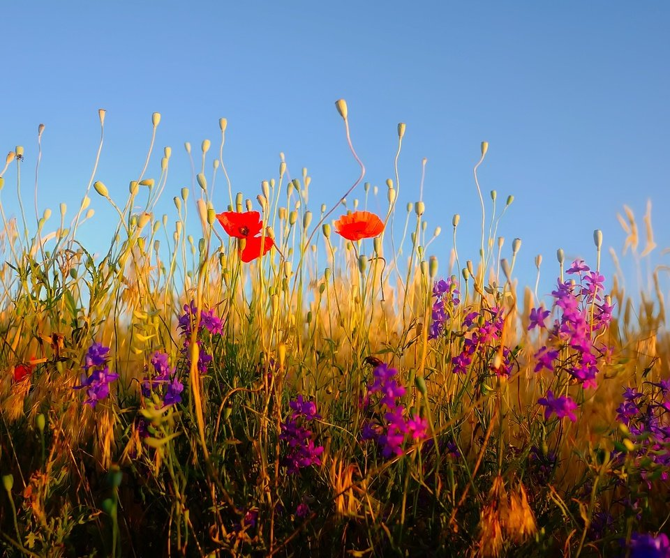 здание для полевые цветы с белой скалы фото нематода заселяет