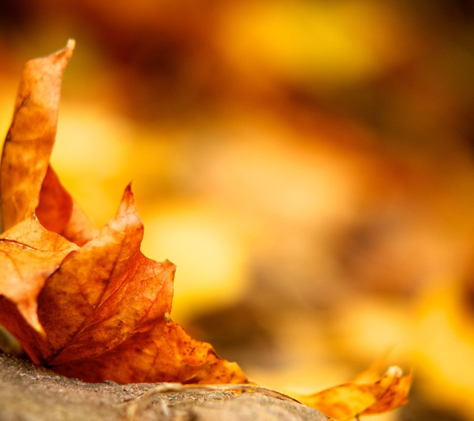 Листья осень ткань без смс