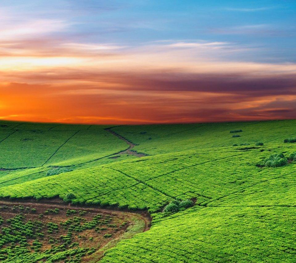холмы плантации бесплатно