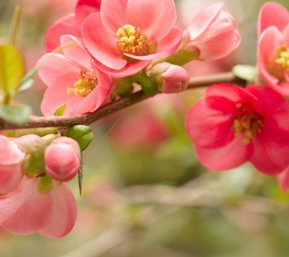 Весна цветы картинки с надписью