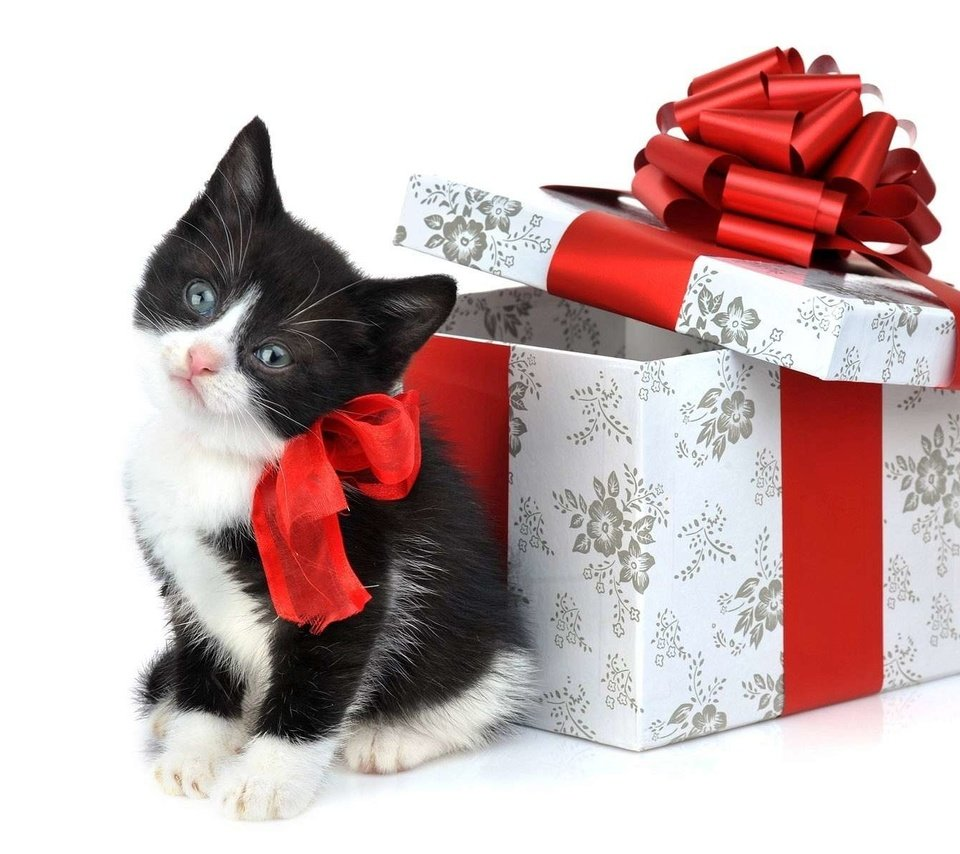 следует подарок картинки с котятами со стихами вам нужна