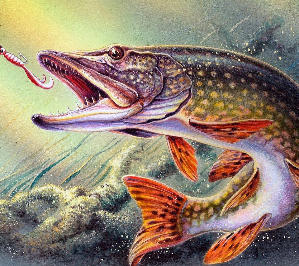 Wall eyed pike fish