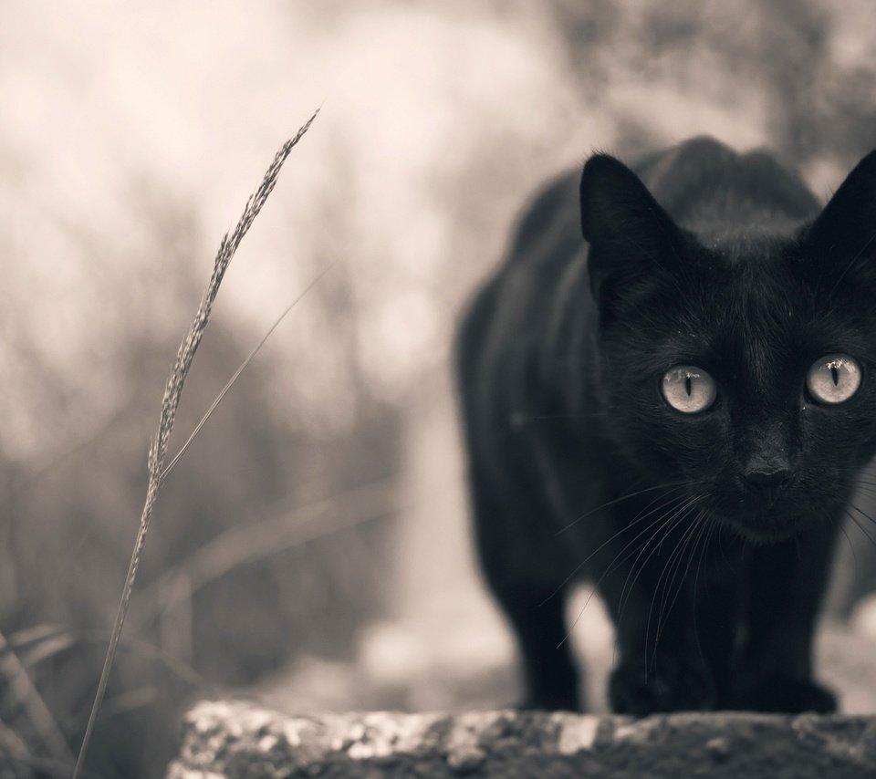 Фото черная кошка плачет