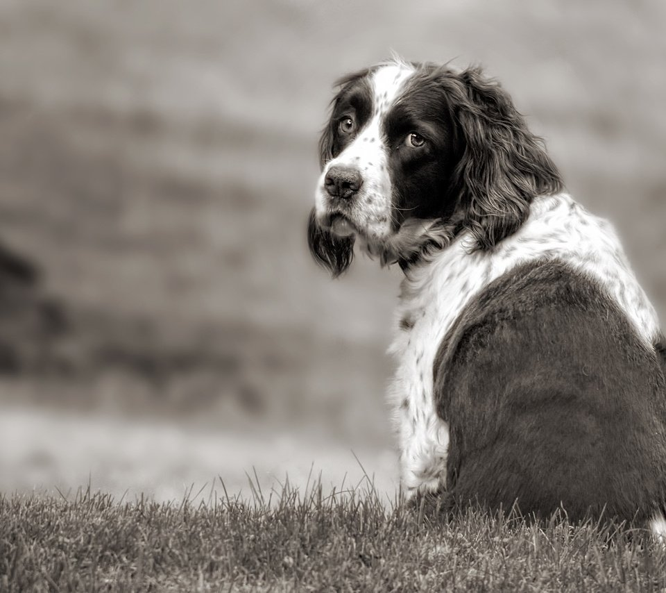 Обои грусть, Собака. Собаки foto 14